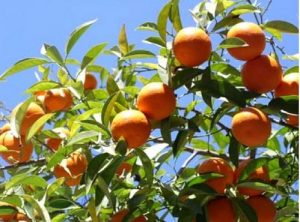 Caring For Your Fruit Tree